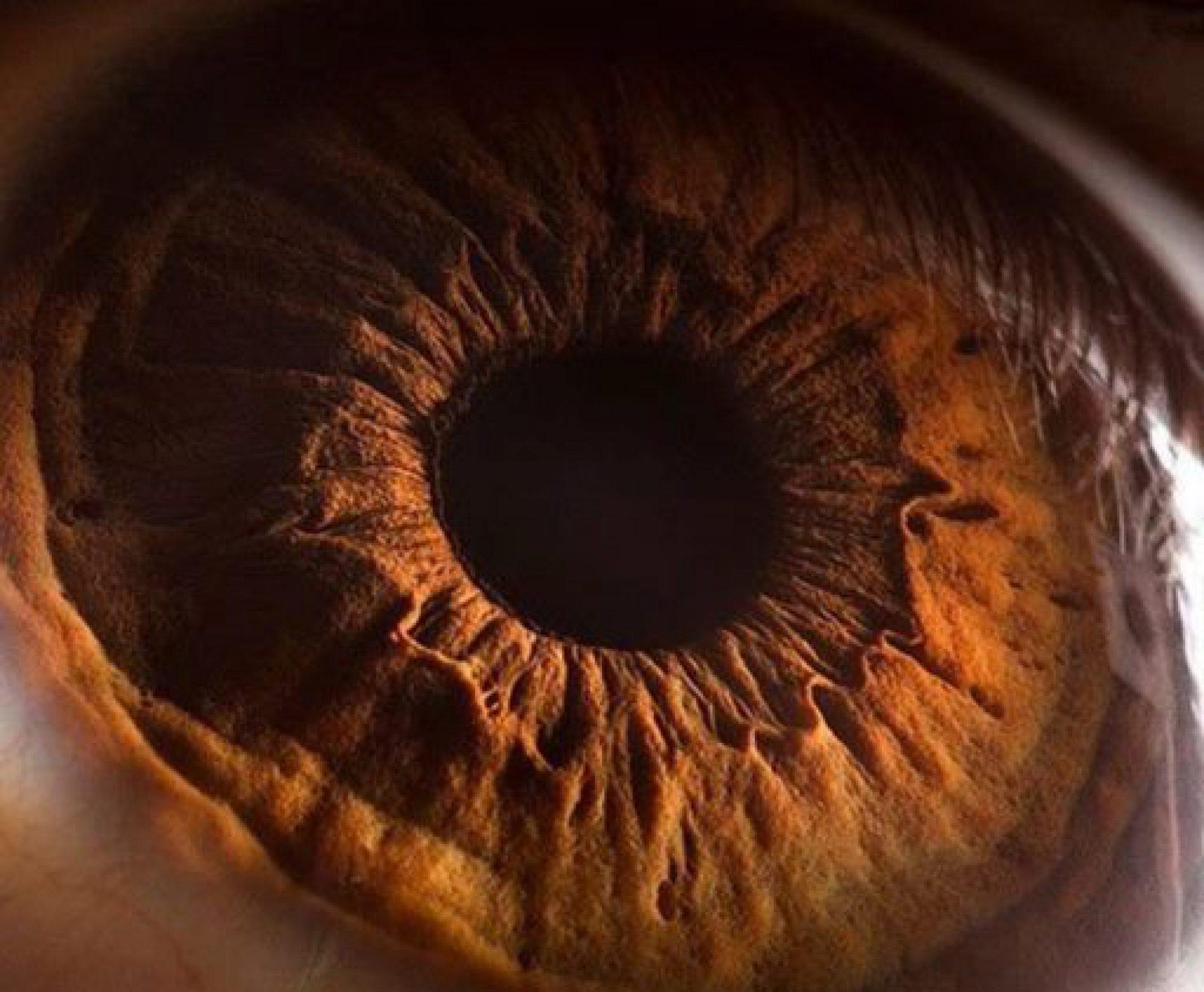 vision.mx